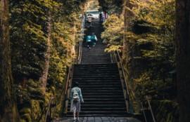藤本鍼灸整骨院 神社には自然がいっぱい