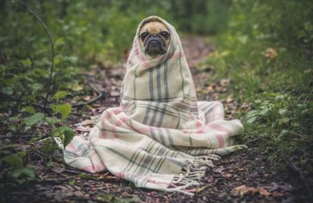 寒くなってきました