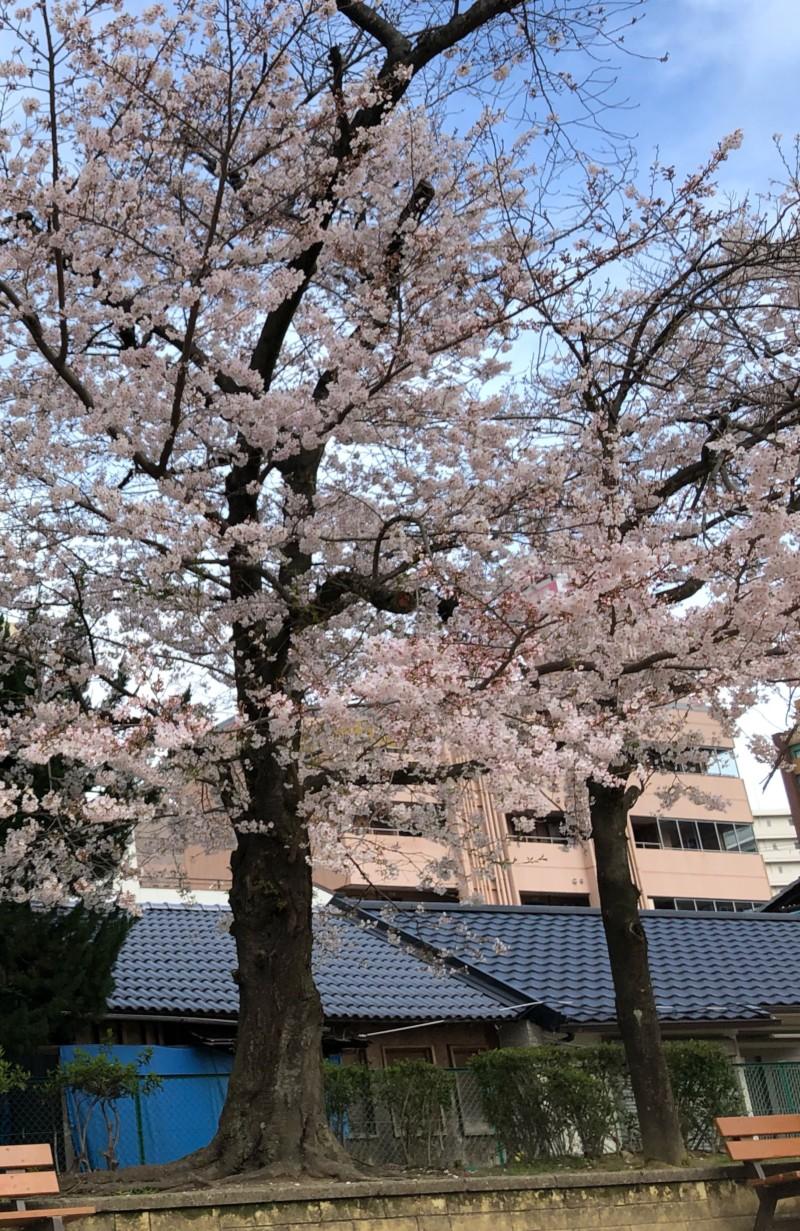 春は花粉症の季節です